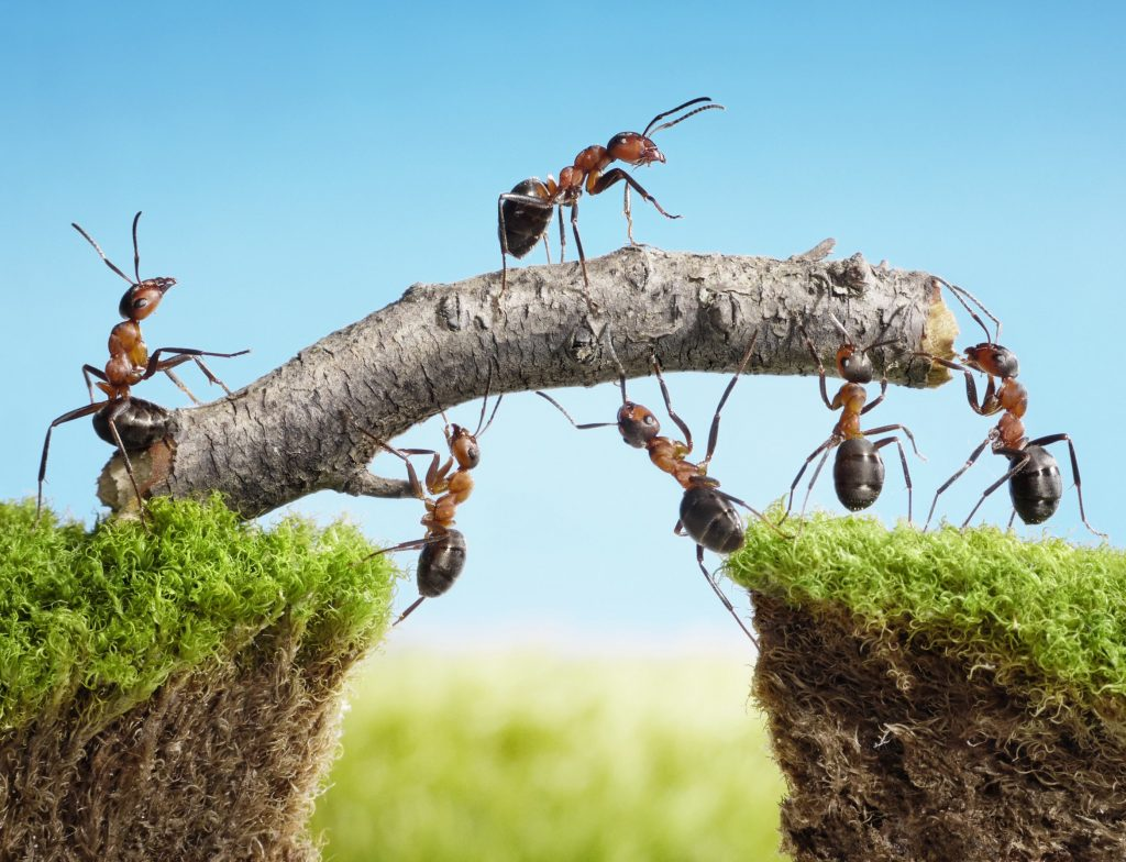 LinkedIn voor je bedrijf inzetten doe je zo + vijf tipsteam of ants constructing bridge with log, teamwork